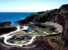 """Yaquina Head Tide Pools: Yaquina Head Tide Pools - """"Quarry Cove"""""""