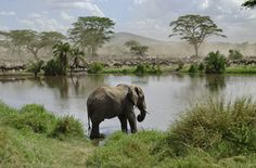 Tansania Gruppenreisen - Tansania Safari Gruppenreisen günstig beim Veranstalter buchen.