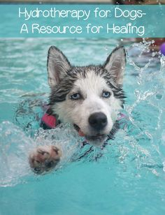 Hydrotherapy is an excellent resource for improved health for dogs. Hydrotherapy for dogs can help with a myriad of physical problems.