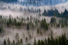 Jeffrey Murray, Fog, Yosemite, California