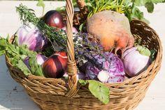 Grădina de la țară - de la pasiune la o mică afacere de familie - gardenbio.ro Wicker Baskets, Picnic, Outdoor, Home Decor, Sun, Plant, Lawn And Garden, Outdoors, Decoration Home