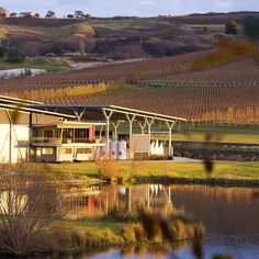 Josef Chromy Vineyard, 370 Relbia Road, Relbia. #vineyard #wine #tasmania #discovertasmania Image Credit: ultimatewineries