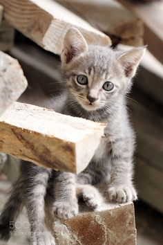 Kitten #PatrickBorgenMD