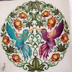 Desenho do beija-flor no livro jardim secreto