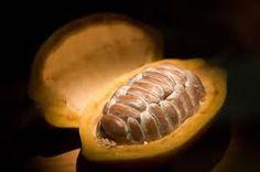 Het vruchtvlees van de cacaoboon