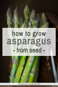 Can you grow asparagus from seed? You bet! It's a good frugal way to start a lot of asparagus plants, and it's easy - here's how!