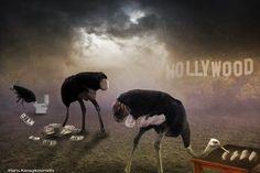Haris Karagkounidis: Photoshop Manipulation Photography-Οstriches
