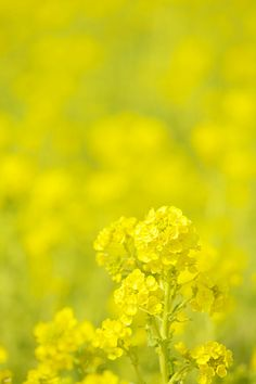 Yellow happiness by AI OGISO, via 500px.
