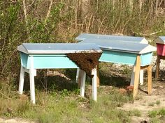 Swarm moving into a baited top bar hive. #beekeeping