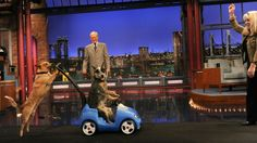 Stupid Pet Tricks: How Letterman's Failed Morning Show Launched His Longest-Running Gag