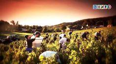 BRINDEREMO CON CHAMPAGNE INGLESE?- Il clima sta cambiando e gli effetti si sentono nei campi e nel bicchiere. #RaiExpo #expo2015 #Milano #cibo #champagne #vino #sostenibilità #clima