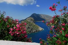 Scenery with oleander, Kalymnos island. Dodecanese, Greece | Flickr - Photo Sharing!