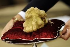 White Gold: A Look at the 2012 Italian Truffle Trade