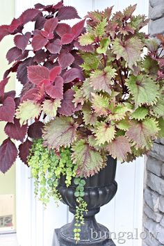 decorating porch ideas - Google Search.  Love the purple coleus, much less expensive than mums.