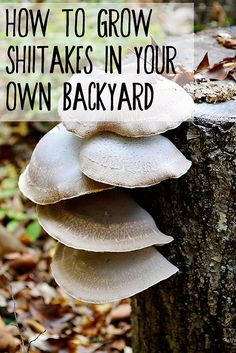 How to Grow Shiitakes in Your Own Backyard http://www.fromscratchmag.com/grow-shiitakes-backyard/