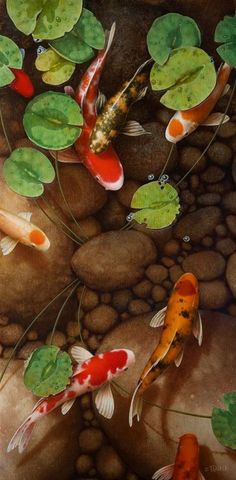 """Koi fish are the domesticated variety of common carp. Actually, the word """"koi"""" comes from the Japanese word that means """"carp"""". Outdoor koi ponds are relaxing. Art Koi, Fish Art, Koi Fish Pond, Fish Ponds, Betta Fish, Koy Fish, Colorful Fish, Tropical Fish, Koi Kunst"""