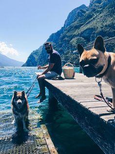 Urlaub mit Hund am Gardasee, Reise Tipps, Reiseblog Tipps, Hotels mit Hund, Restaurants, Torri del Benaco, Malcesine, Style Blog, Magazin, www.whoismocca.com Hotels, Mocca, Style Blog, Restaurants, Dogs, Animals, Traveling, Holiday, Viajes