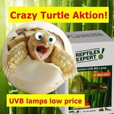 """Now: UVB lamps with discount. Promotion Code """"hammexpert"""". Buy in our Webshop www.reptilesexpert.com Turtle Reptile, Promotion Code, Lamps, Discount Price, Iguanas, Terrariums, Reptiles, Lightbulbs"""
