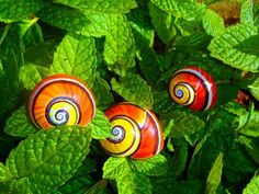 SNAILS WITH BEAUTIFUL COLORED SHELLS