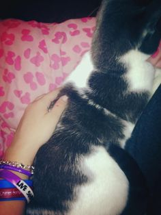Ill just cuddle with my kitty than ._. cx