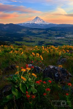 """Spring Bouquet ""  Mt.Hood from Hood River, Oregon by Adrian Klein"