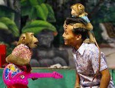 Image result for monkeys in thailand