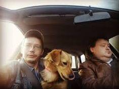 a fekete imre dexter - Google-keresés Dexter, Google, Dogs, Animals, Fictional Characters, Art, Art Background, Animales, Dexter Cattle