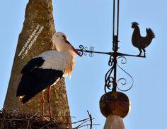 Kakas és gólya :)