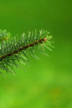 2292 Green | Flickr - Photo Sharing!