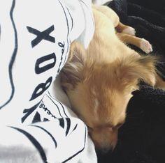 Puppy cuddles 🐶