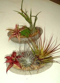 Tillandsia/Cryptanthus boats anyone? :-) photo by Woodward Greenhouses.