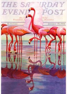 Flamingos on the Saturday Evening Post cover in January 1938