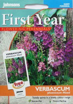 Violetinė tūbė Mixed (lot. Verbascum phoeniceum)