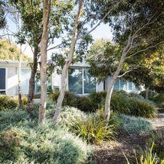 Garden Tips Curlewis Australian Garden Design, English Garden Design, Australian Native Garden, Modern Garden Design, Australian Bush, Garden Drawing, Garden Art, Garden Illustration, Coastal Gardens