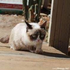 The Daily Grump | June 14, 2013