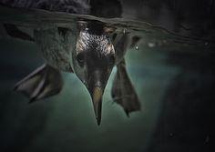 Curious Watcher - Animals Birds