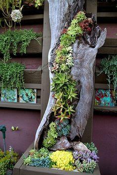 Make garden art using succulents and drift wood.