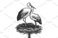 Stork in nest animal engraving vector illustration
