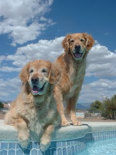 My precious Leo and Casey are both at the Rainbow Bridge now..but they loved spending time outside in the sunshine under our beautiful Nevada skies!