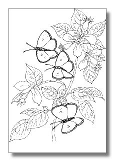 color by number coloring pages for adults butterfly with flowers color by color. Black Bedroom Furniture Sets. Home Design Ideas