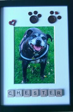 Chester in photo frame, made for Pauline