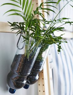 Plant pots made from large plastic bottles hung on the ladder with IKEA hooks.