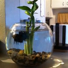 fish bowl bamboo