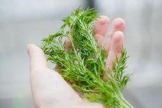 Egy növény, ami a fokhagymánál is hatásosabb – Csökkenti a vérnyomást és csodát művel a vércukorral! - Blikk Rúzs Healing Herbs, Medicinal Plants, Legume Bio, Medicine, Health, Soups, Gardens, Herbs, Keeping Flies Away