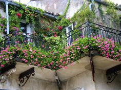Nothing dresses up a window or balcony like flower boxes. Check out these 40 stunning flower and balcony flower box arrangements. Balcony Flower Box, Small Balcony Garden, Balcony Plants, Flower Boxes, Balcony Gardening, Modern Balcony, Small Balconies, Flower Baskets, Garden Benches