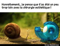 Akenini.com - Images drôles animaux - Funny cartoons animals