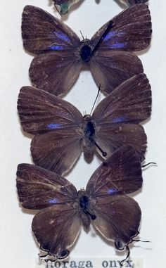 Amethyst butterflies - symbol of transformation into something beautiful.