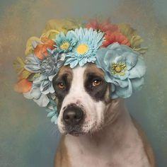 """wilting-sun-flower: """" equanimity-in-the-stars: """" ithelpstodream: """" Flower Power: Pit Bulls of the Revolution """" Yes. This is the kind of content I signed up for. """" THIS IS WHAT I NEED """""""