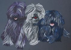 perros de raza hungara