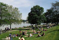 Auf der Wiese liegen am #Rhein in #Mainz